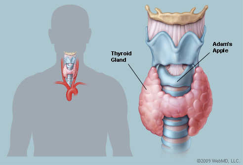 Surgery of the thyroid has been a long standing part of my practice ...