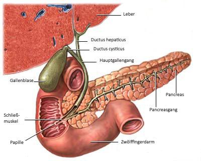 Gallenblase, minimalinvasive Operation, laparoskopische OP